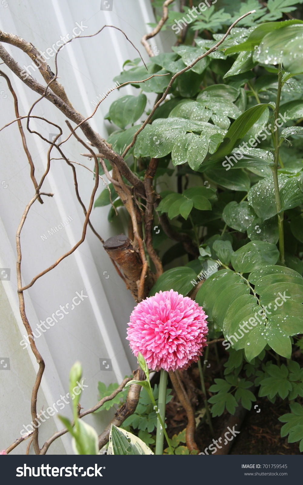 Round Pink Flower Garden Stock Photo 100 Legal Protection