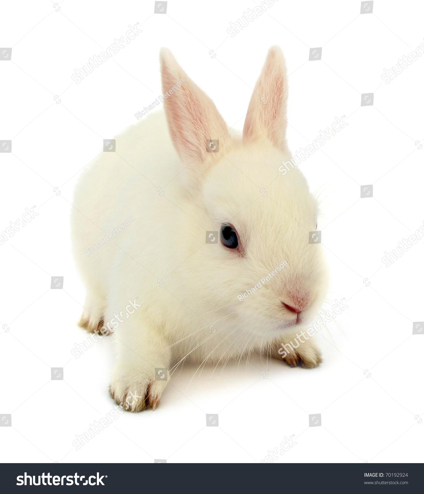 White Rabbit Bunny Baby Blue Eyes Stock Photo 70192924 ...