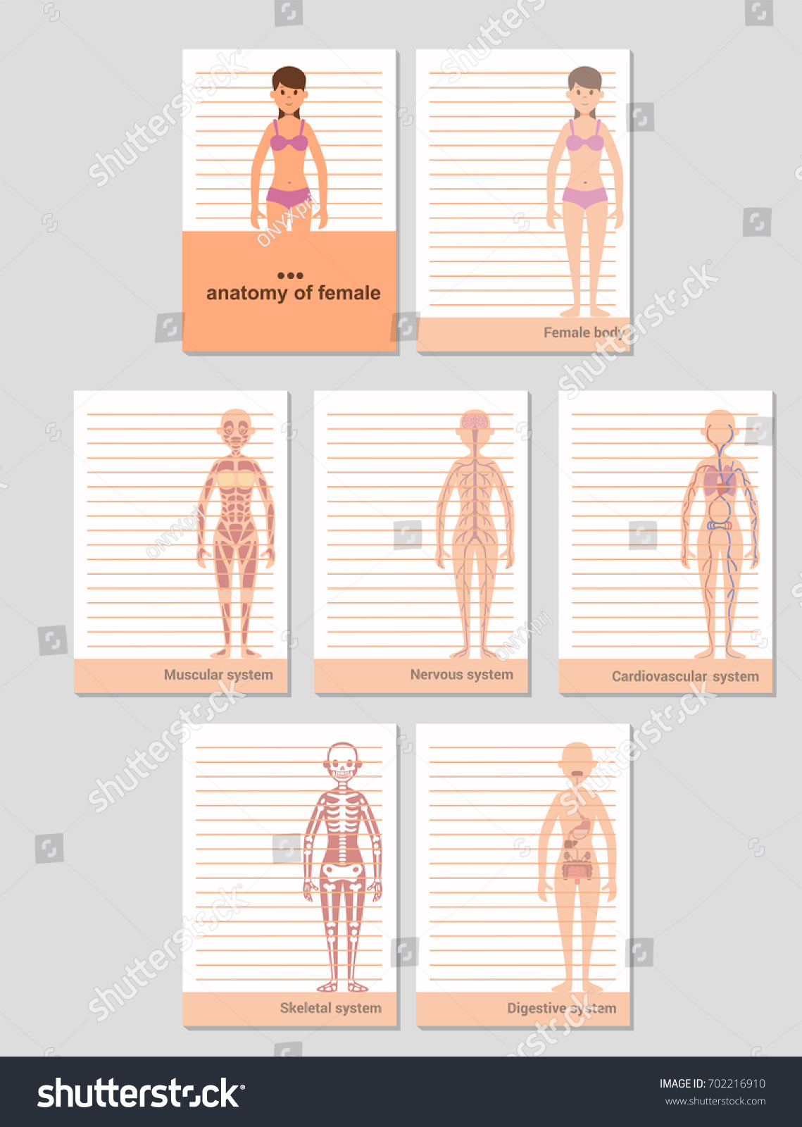 Notepad A 6 Format Records Anatomy Female Stock Photo Photo Vector