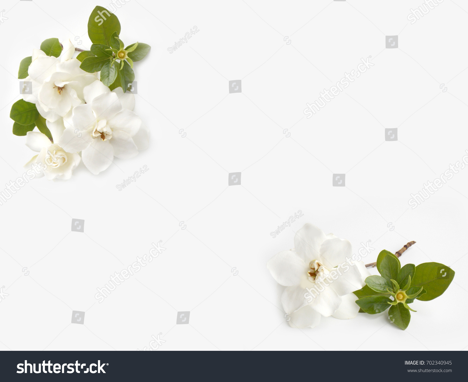 White Gardenia Flower Bouquet Isolated On Stock Photo (Royalty Free ...