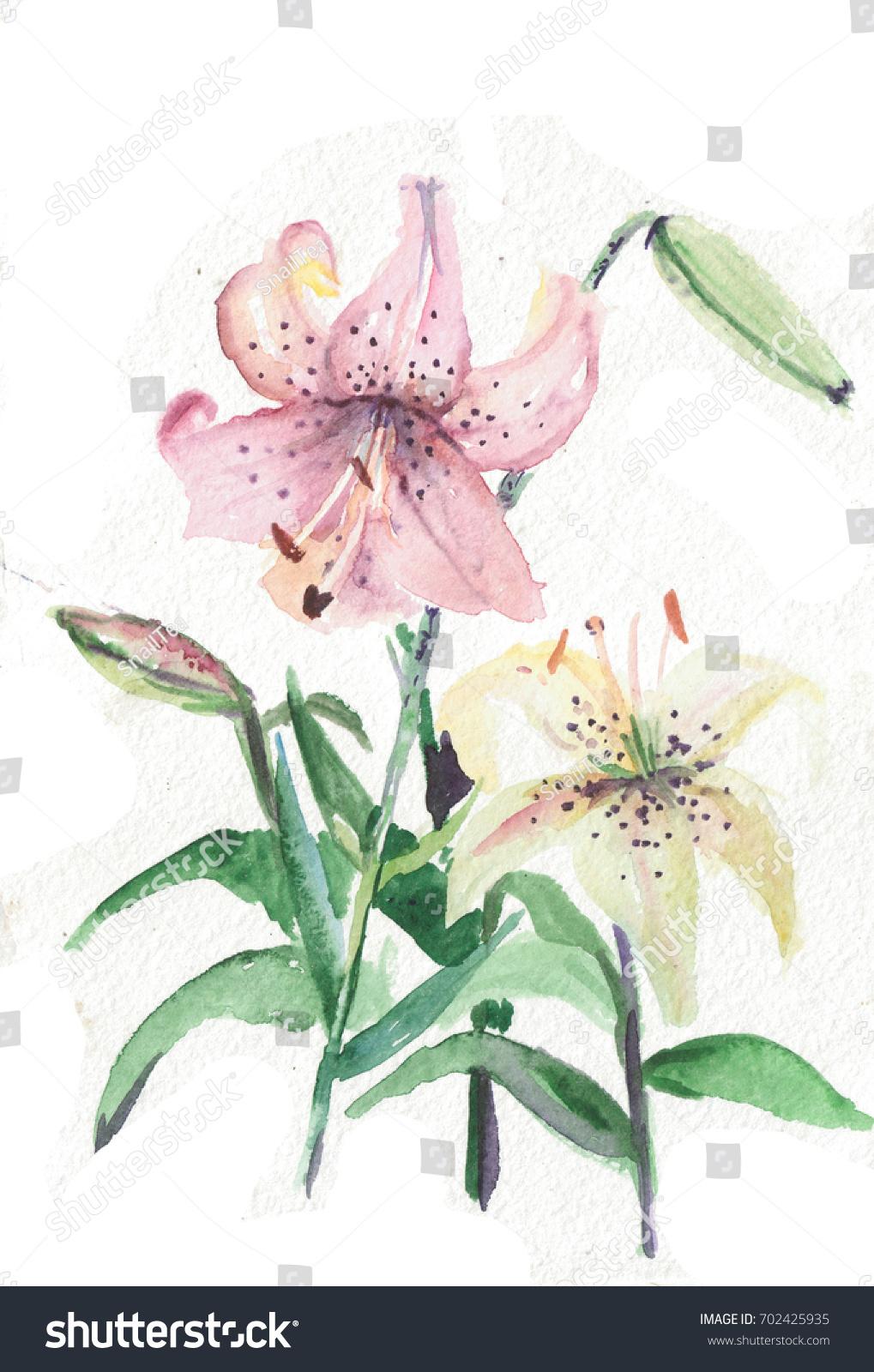 Beautiful Flowers Pink Lily Flowers Bud Stock Illustration 702425935