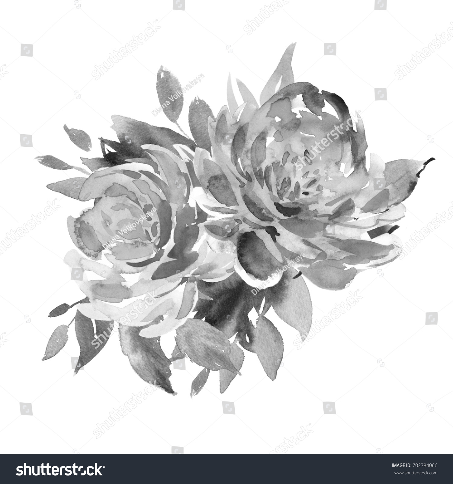 Bouquet Two Black White Roses Watercolor Stock Illustration