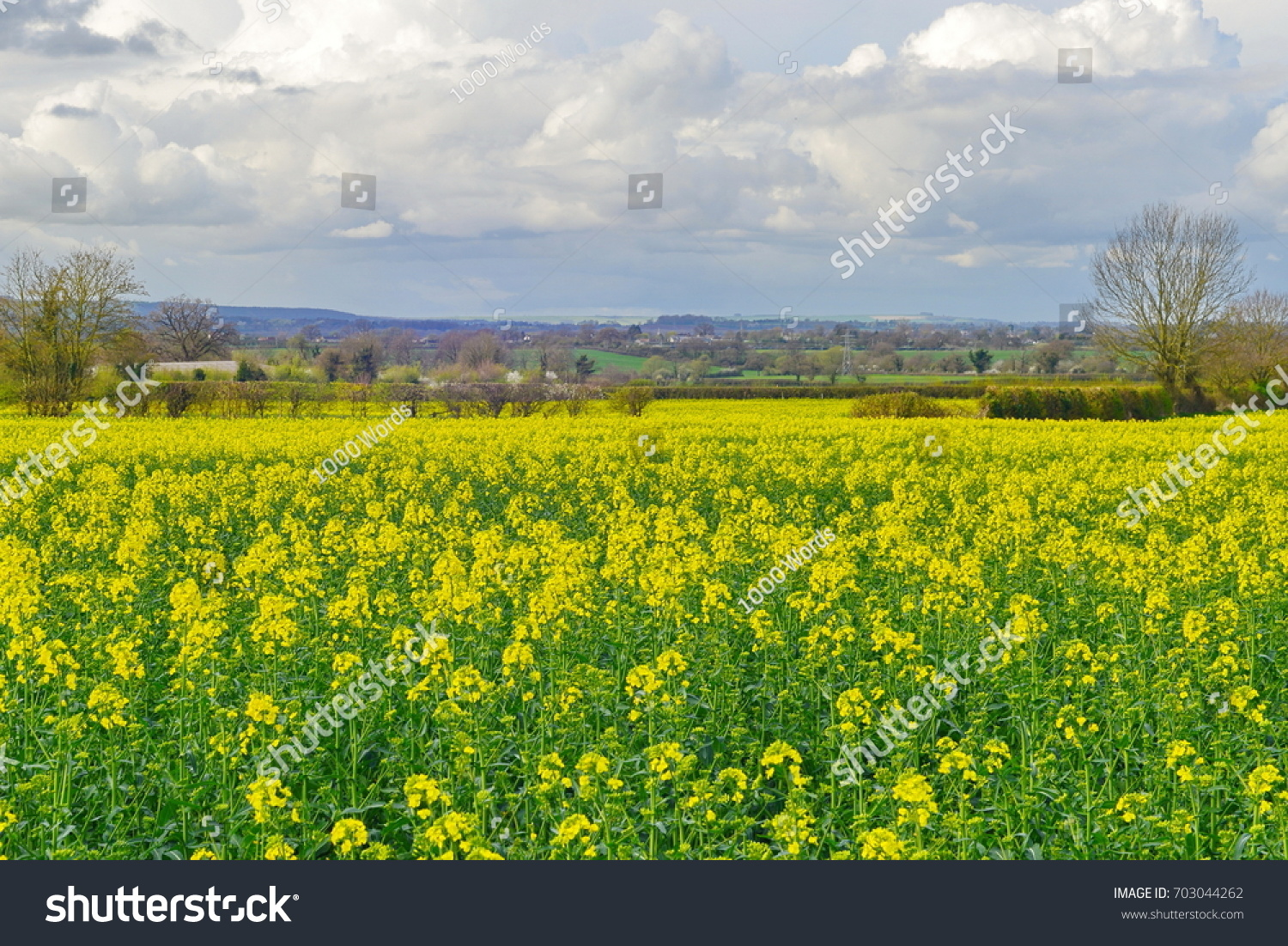 Scenic view yellow flower crops farmland stock photo royalty free scenic view of yellow flower crops in a farmland field mightylinksfo