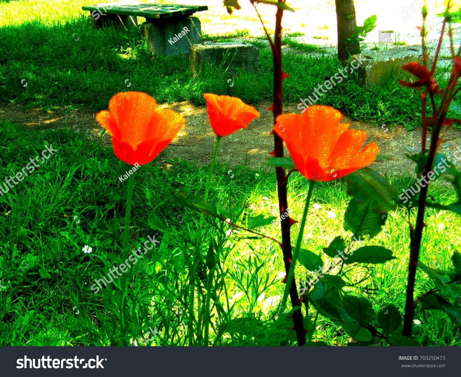 Orange Poppy Flowers Public Park Textured Stock Illustration
