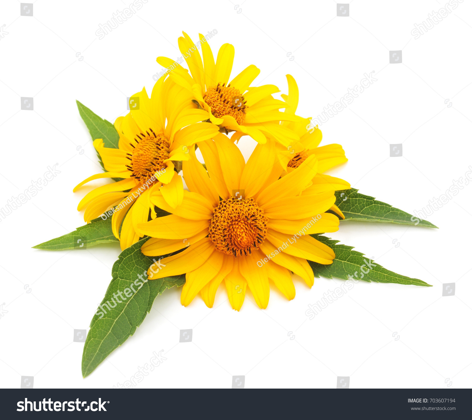 Yellow Flowers Isolated On White Background Ez Canvas