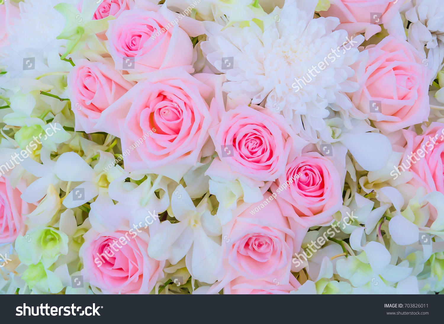 Closeup image of beautiful flowers wall background with amazing red id 703826011 izmirmasajfo