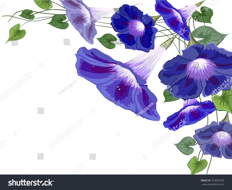 Flowers Bells Bindweed Ivy Painted White Stock Vector 703830709