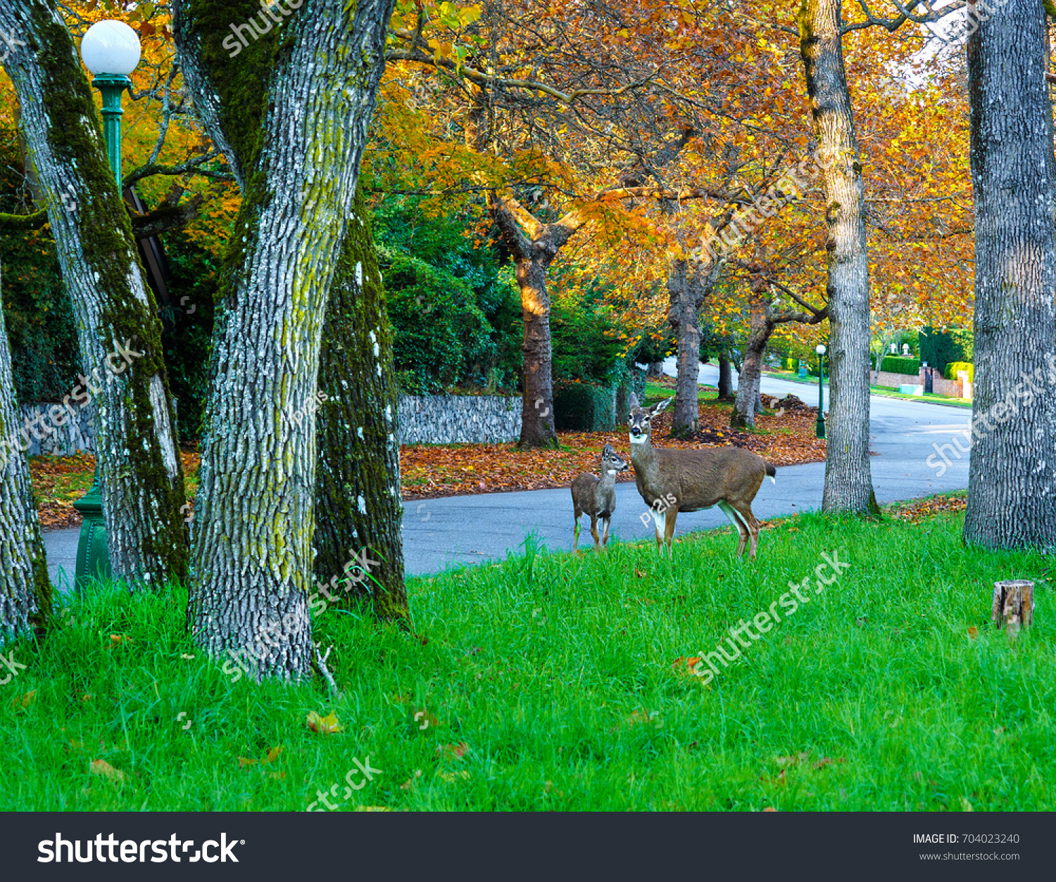 Autumn Colored Bright Leaves On Trees Stock Photo (Edit Now ...