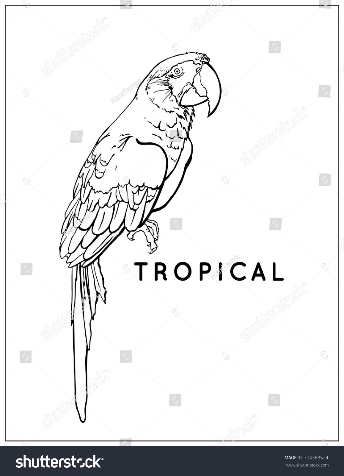 Vector Tropical Exotic Bird Black White Stock Vector 704363524 ...