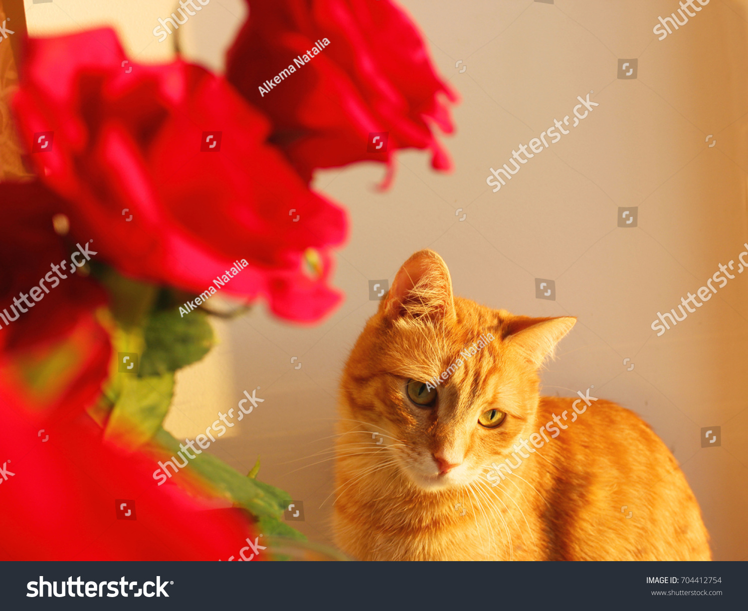 Beautiful Red Roses Bouquet Pretty Kitten Stock Photo Edit Now