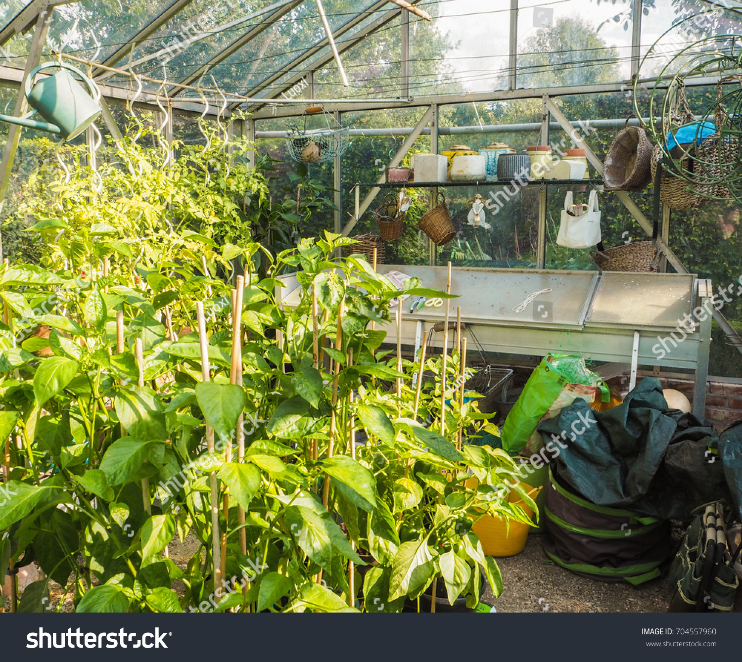 grow raspberries the greenhouse fruits growing to a green gardening popular vegetables and in most house garden