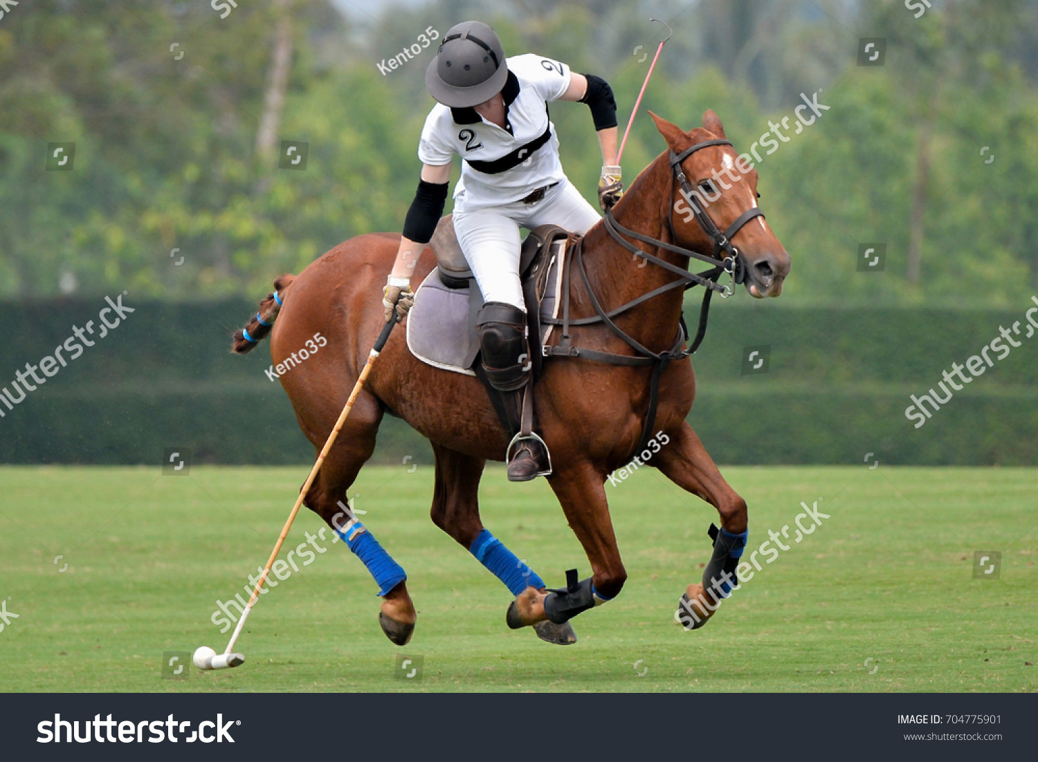 Woman Horse Polo Player Use Mallet Stock Photo 704775901