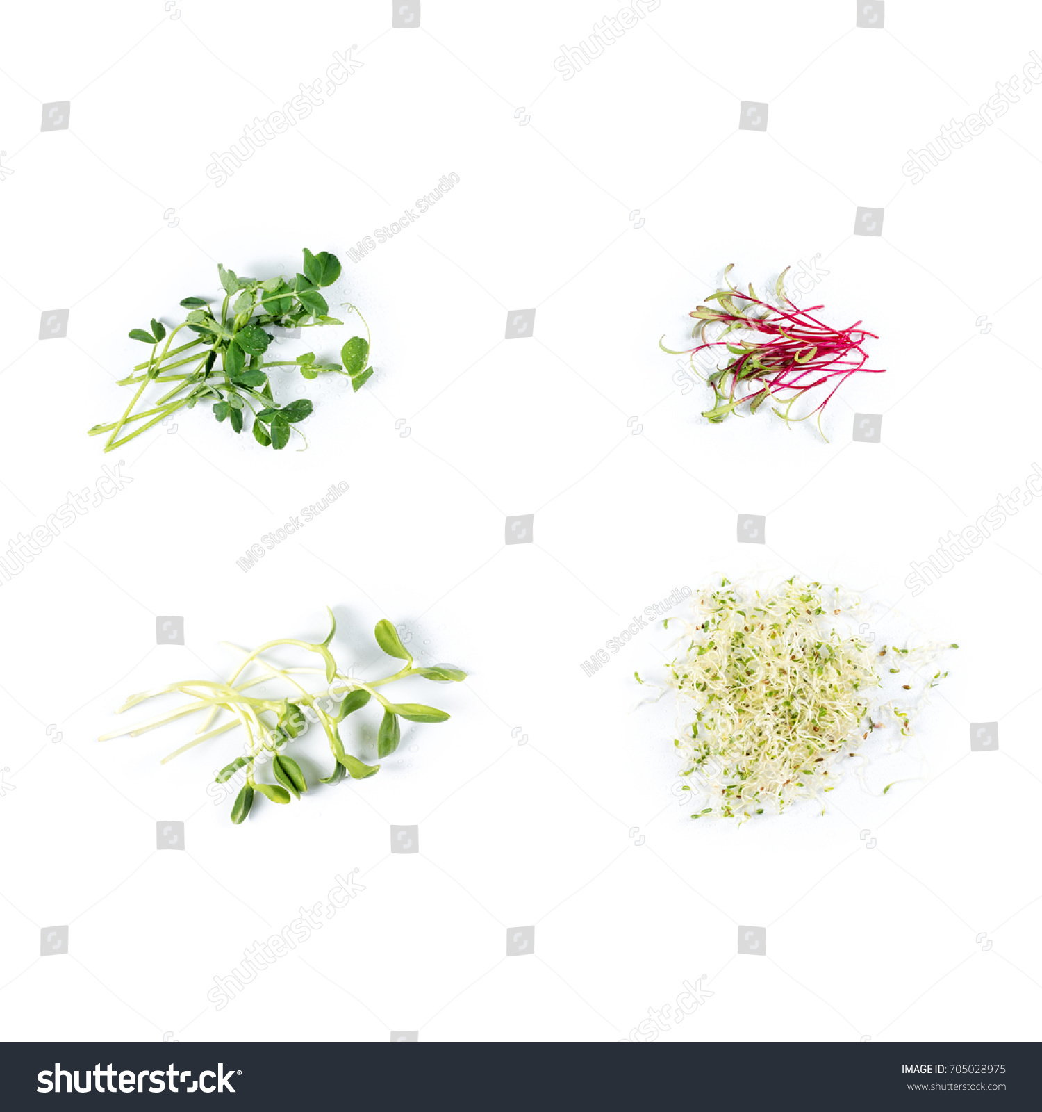 Different Types Micro Greens On White Stock Photo Edit Now