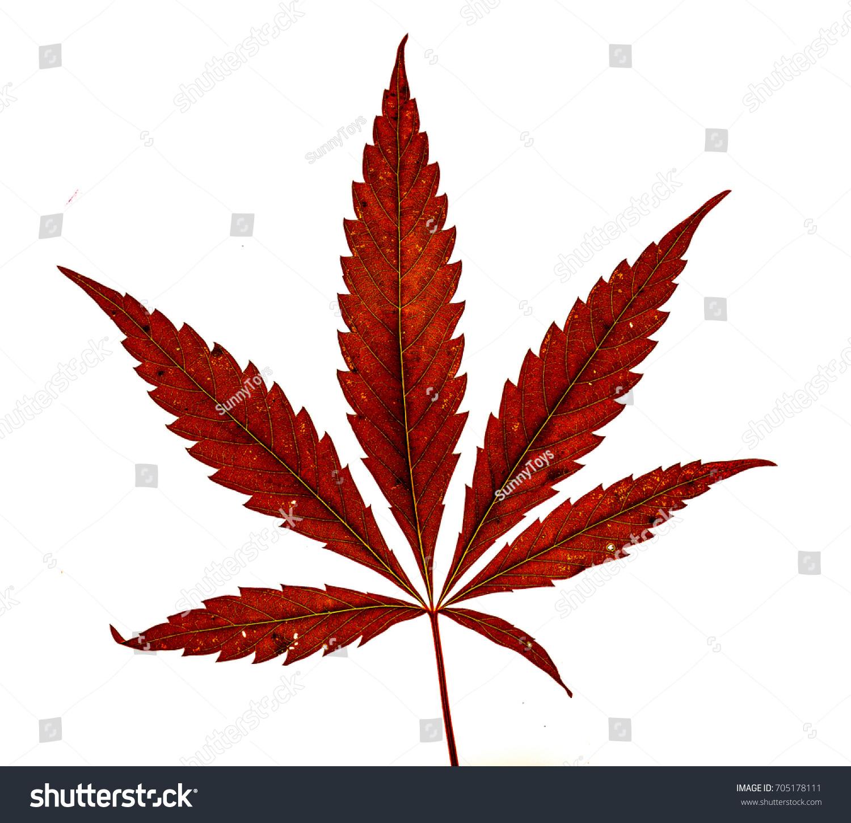 Cannabis singles dating