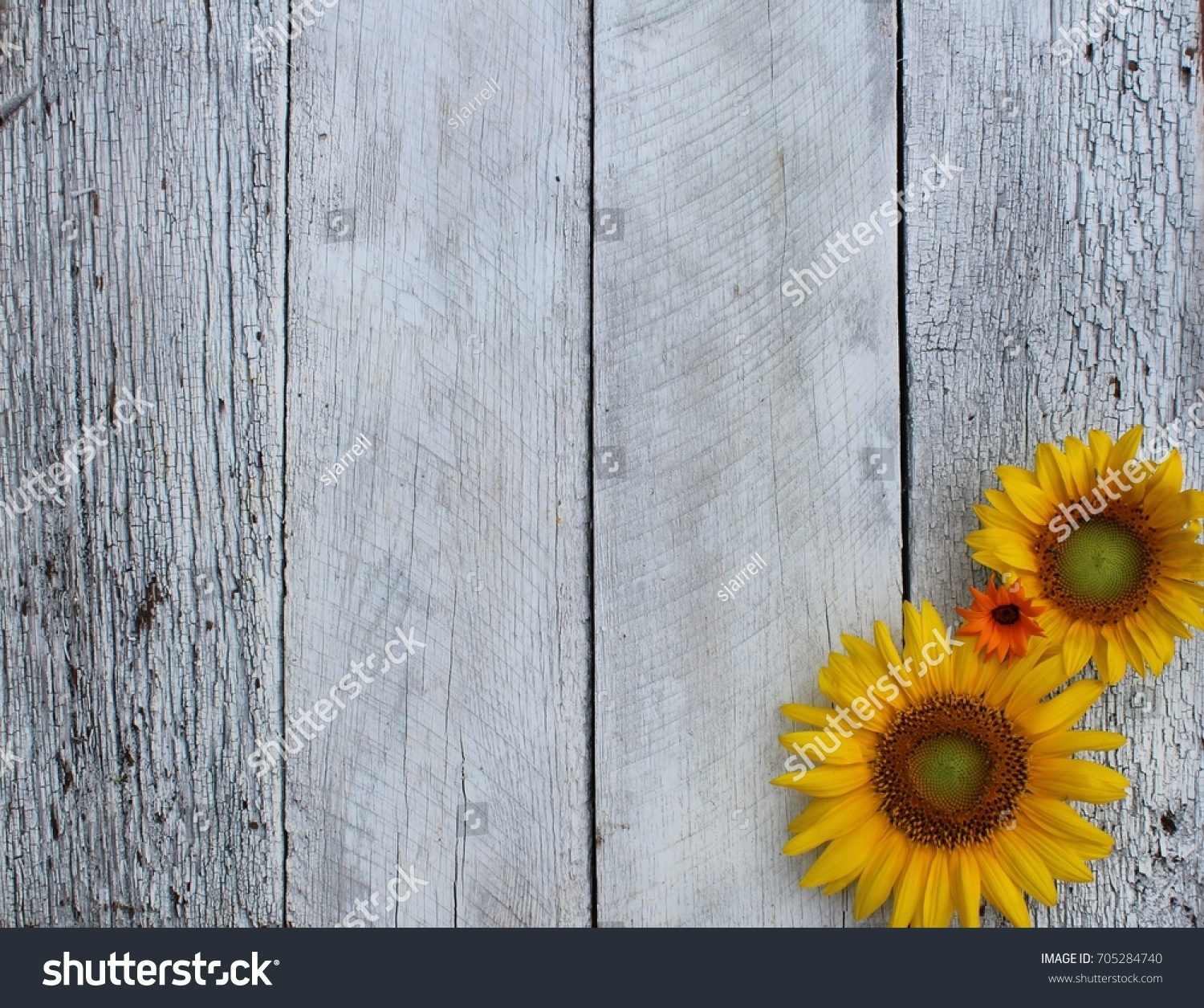 Sunflowers On Rustic Wood Background