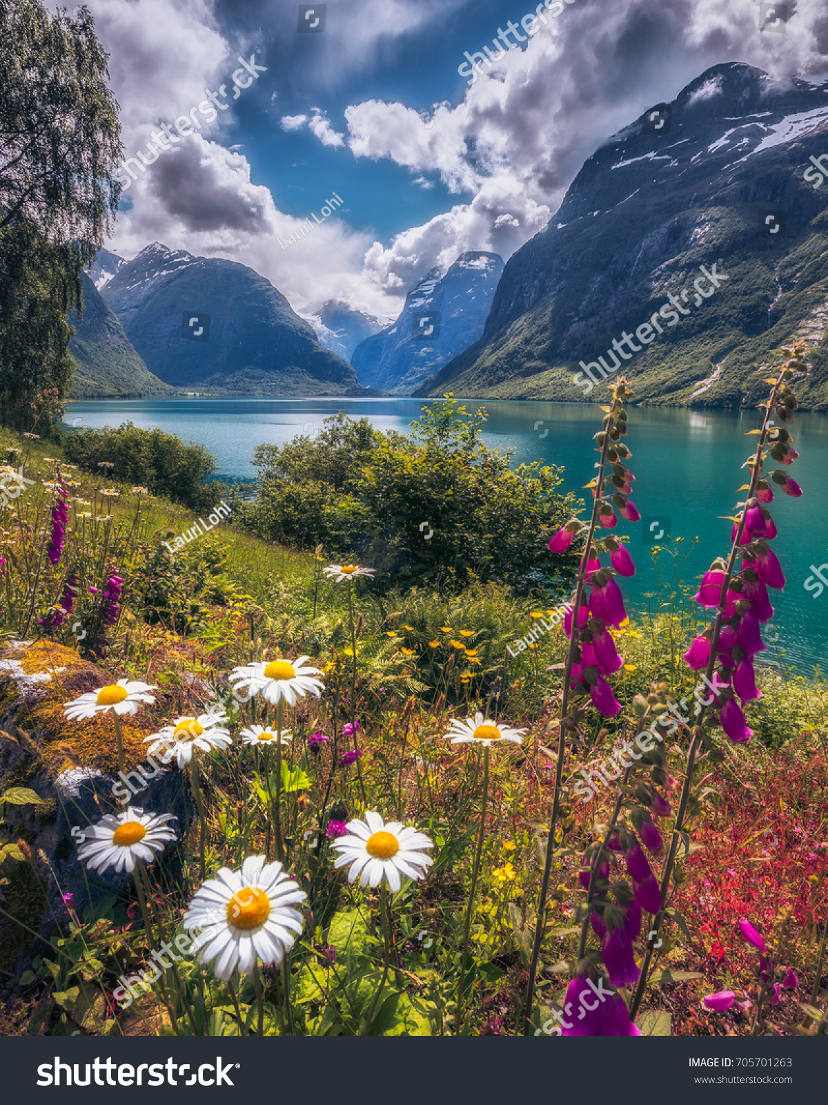 Beautiful flower mountain landscape on lovatnet stock photo royalty beautiful flower and mountain landscape on lovatnet norweigian nature and colorful water izmirmasajfo