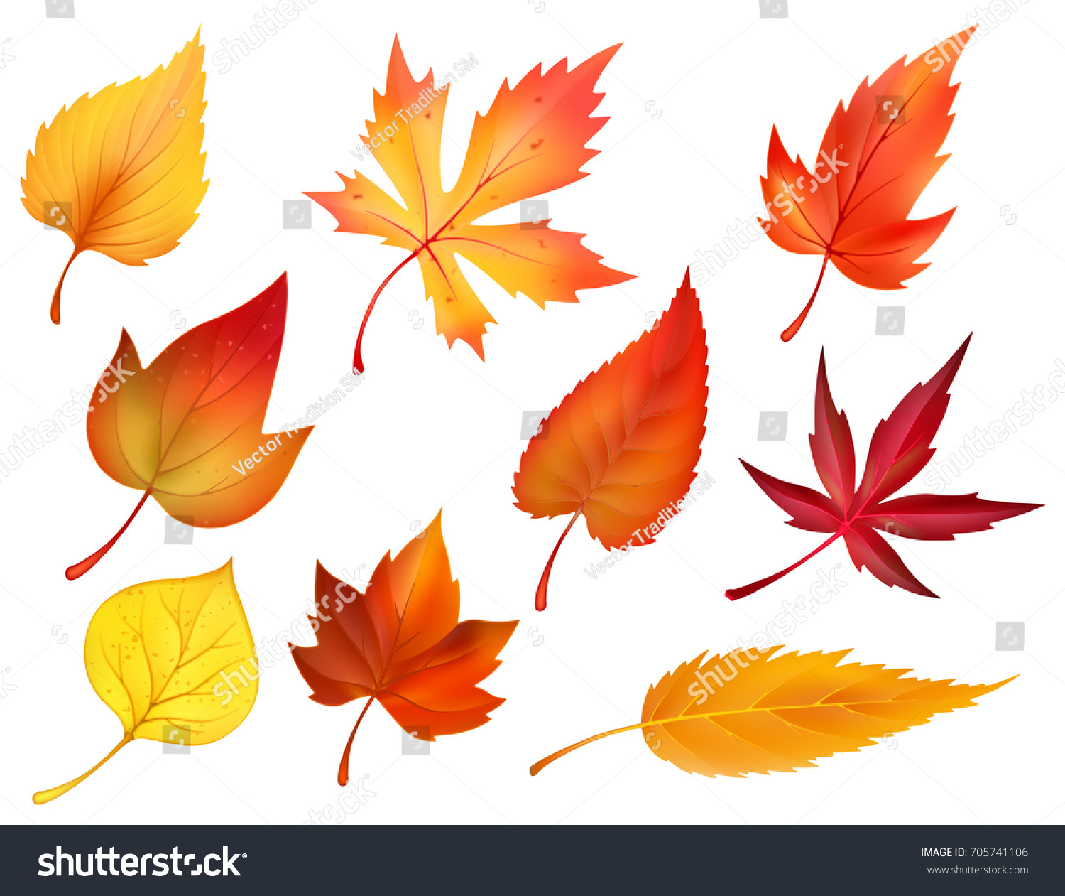 Autumn Leaves Or Fall Foliage Icons. Vector Isolated Set Of Maple, Oak Or  Birch
