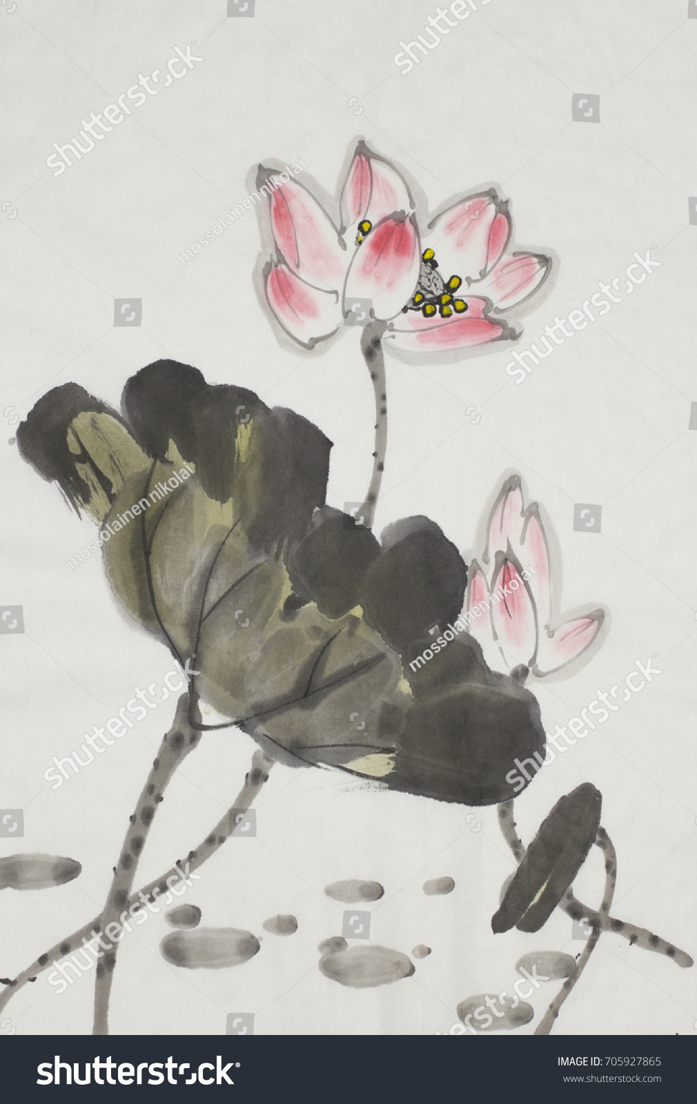 Pink lotus flower painted chinese style stock illustration 705927865 pink lotus flower painted in chinese style izmirmasajfo