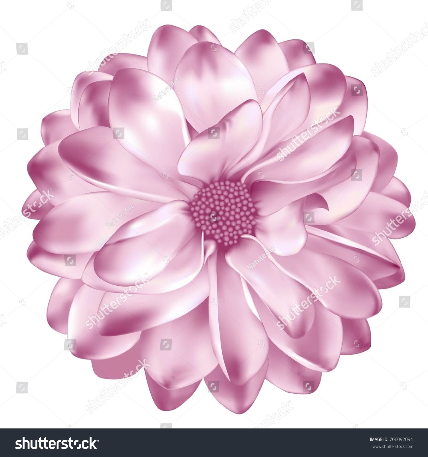Mona Lisa Flower Pink Dahlia Flower Stock Vector Royalty Free