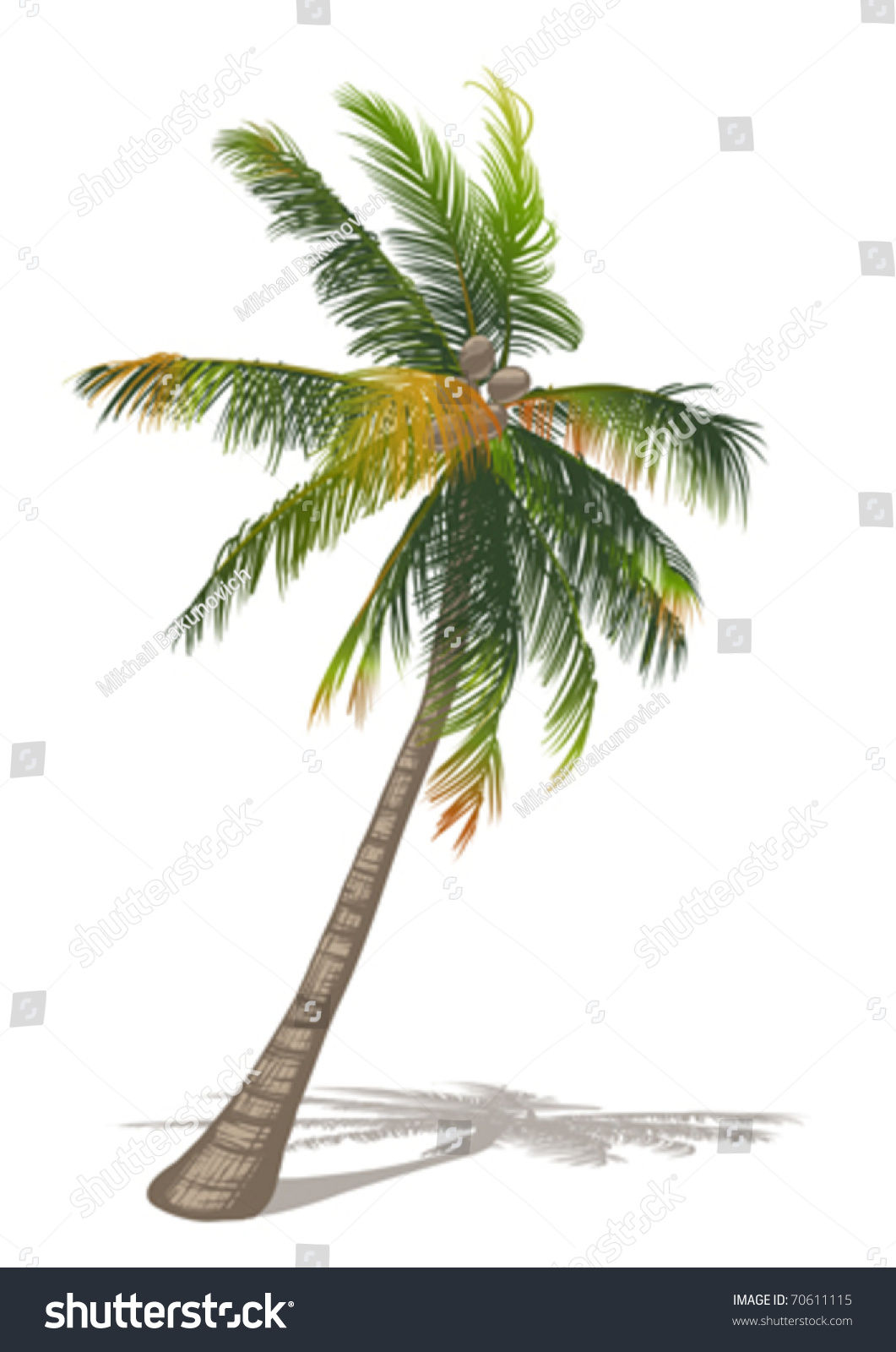 coconut palm tree The coconut palm tree is the world's symbol for relaxation you can grow your very own by meeting these conditions and it will reward you with bountiful fruits.