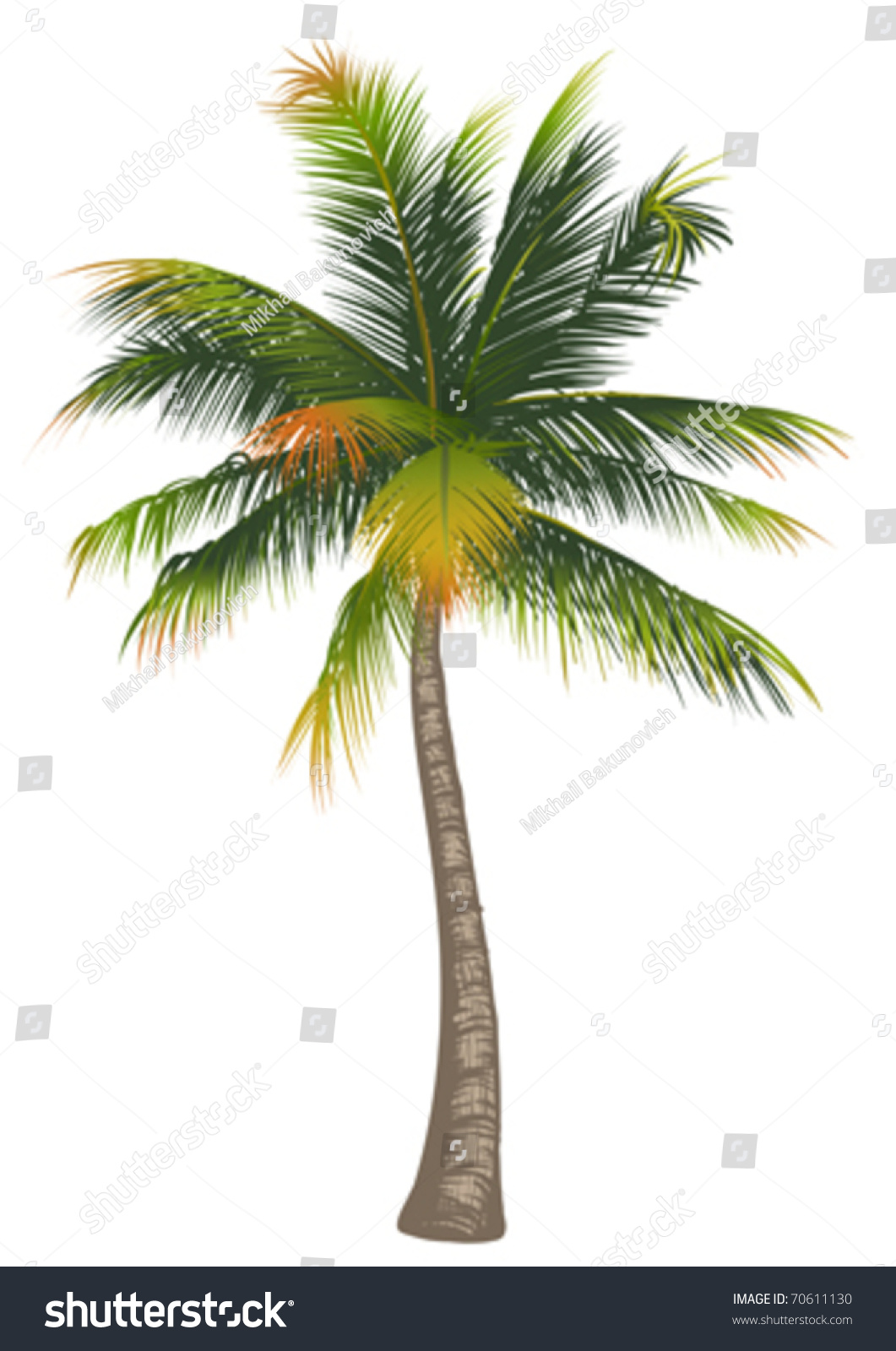 coconut palm tree There are so many more palm tree uses than just providing shade for you on a hot caribbean beach it is one of the most widely used trees on the planet.