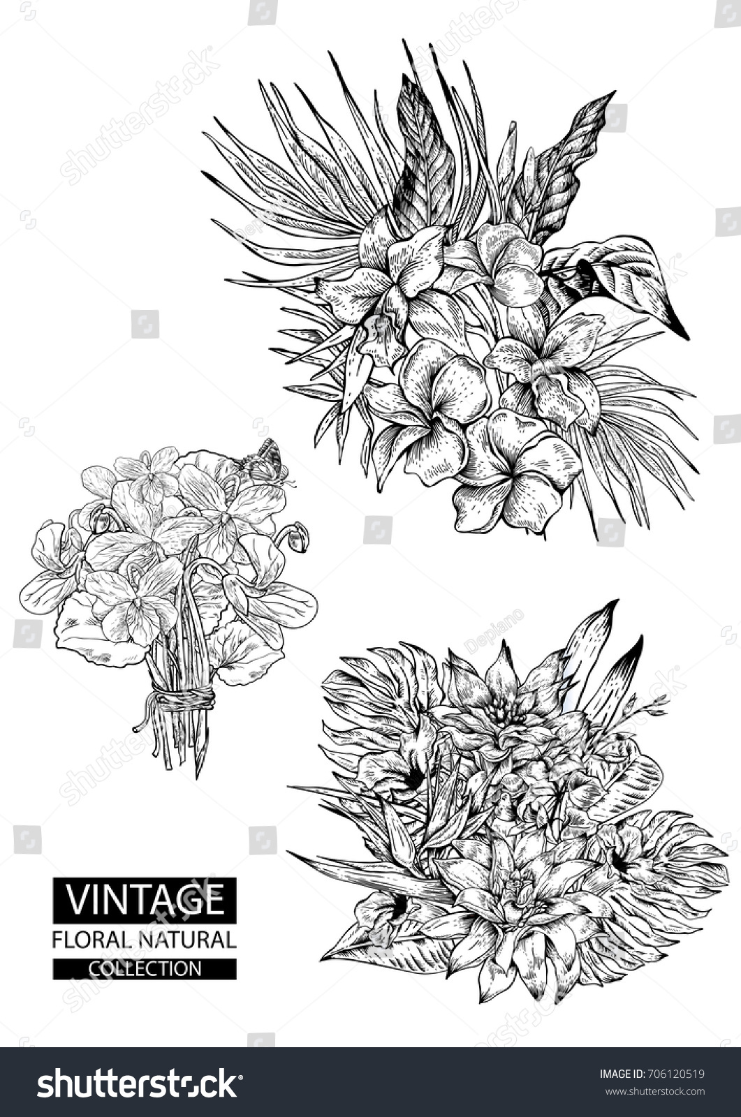 Floral Outline Coloring Vector Vintage Collections Natural Set Of
