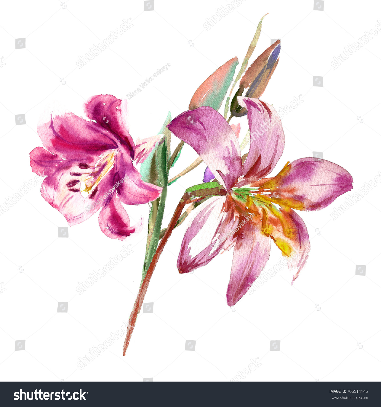 Painted Pink Lilies Bouquet Watercolor Painting Stock Illustration