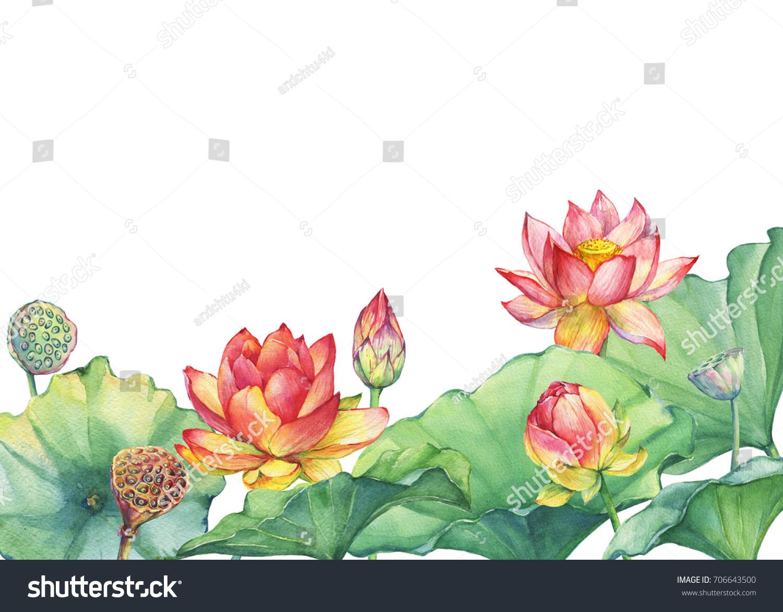 Banner Border Pink Egyptian Lotus Flower Stock Illustration