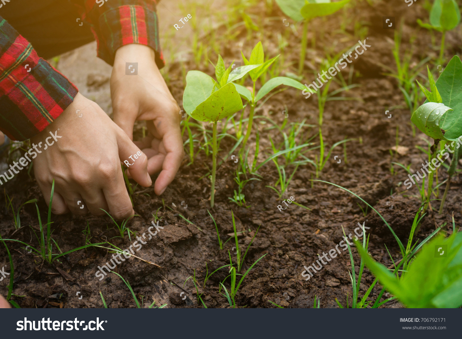 Agriculture manages vegetable garden to grow. | EZ Canvas