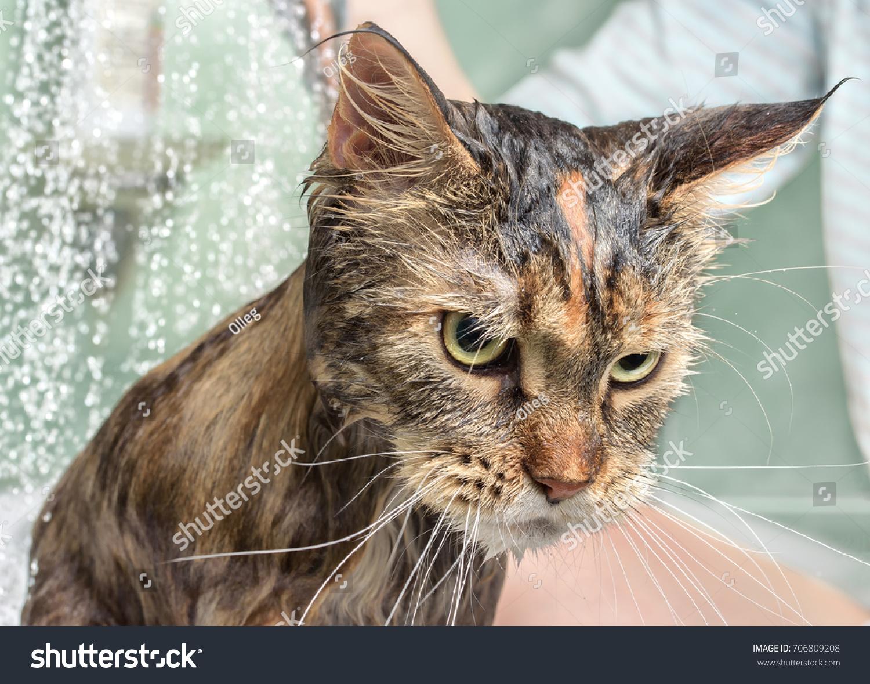 ВСЕ ПРОГРАММЫ ОТ АВТОРА BATHING CAT СКАЧАТЬ БЕСПЛАТНО