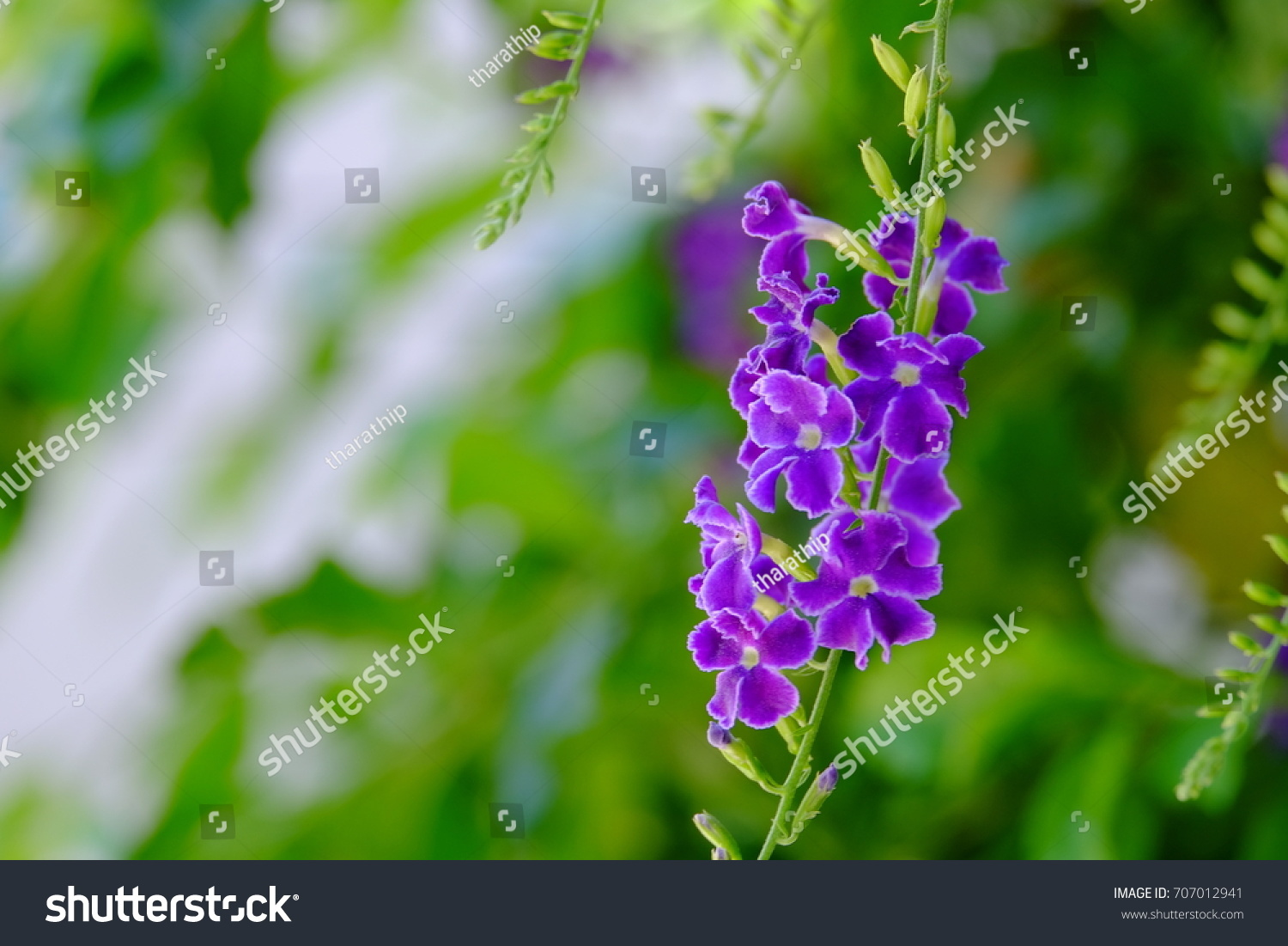 Purple Flowers Small White Flowers Bright Stock Photo Edit Now