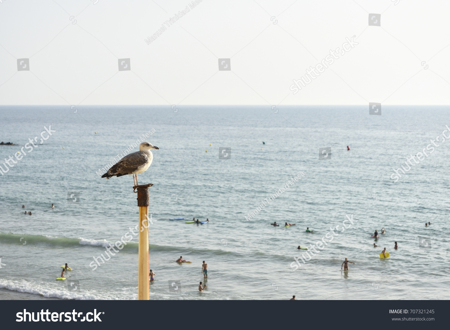 stock-photo-a-seagull-looks-at-people-on