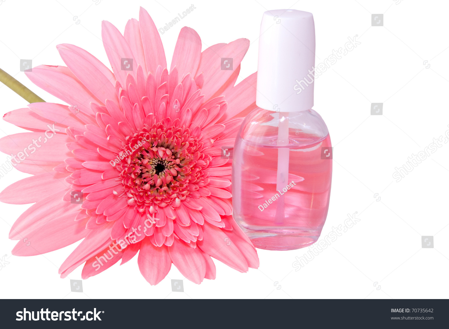 Nail Care Product Bottle Pink Gerbera Stock Photo Royalty Free
