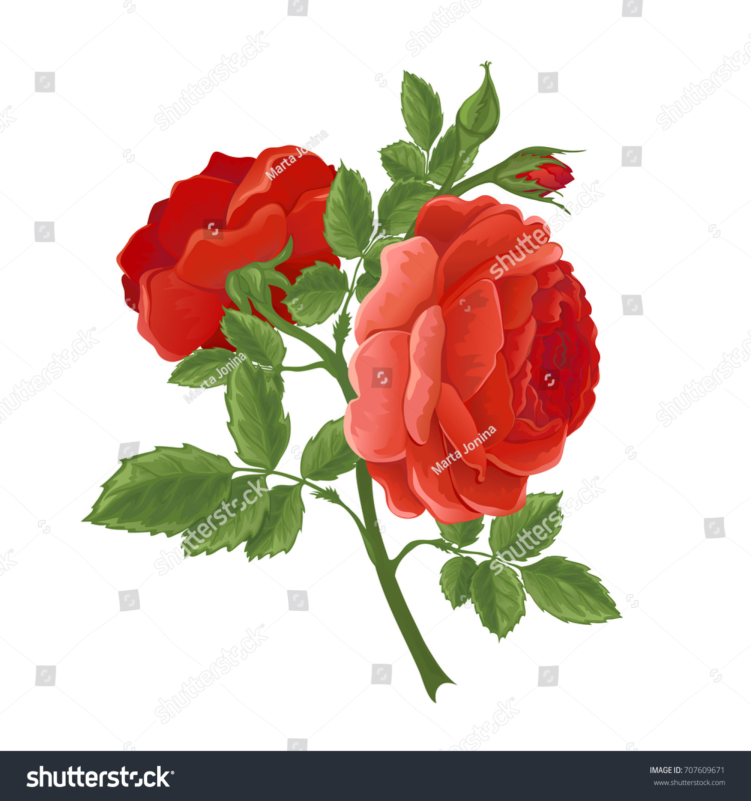 English Red Rose Graphic Flowers Wedding Stock Vector (Royalty Free ...