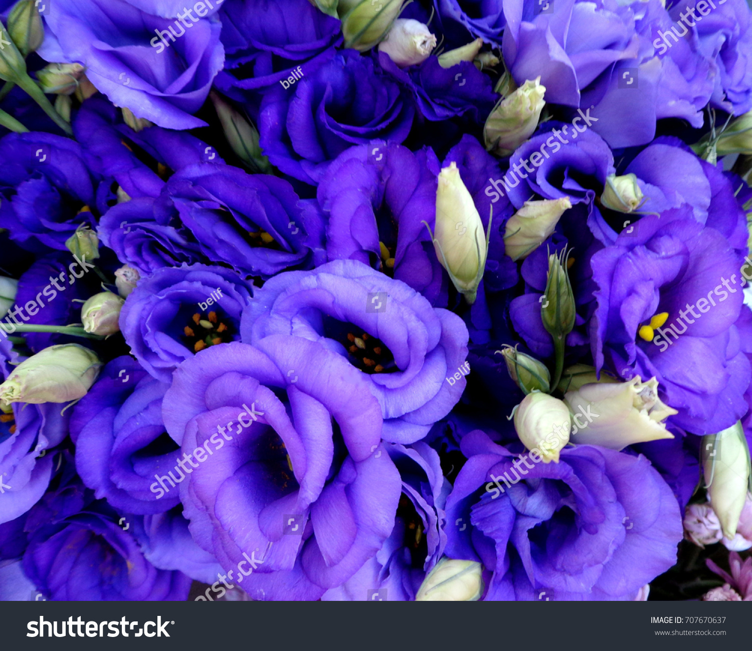 Blue purple lisianthus flowers bouquet stock photo edit now blue and purple lisianthus flowers bouquet izmirmasajfo