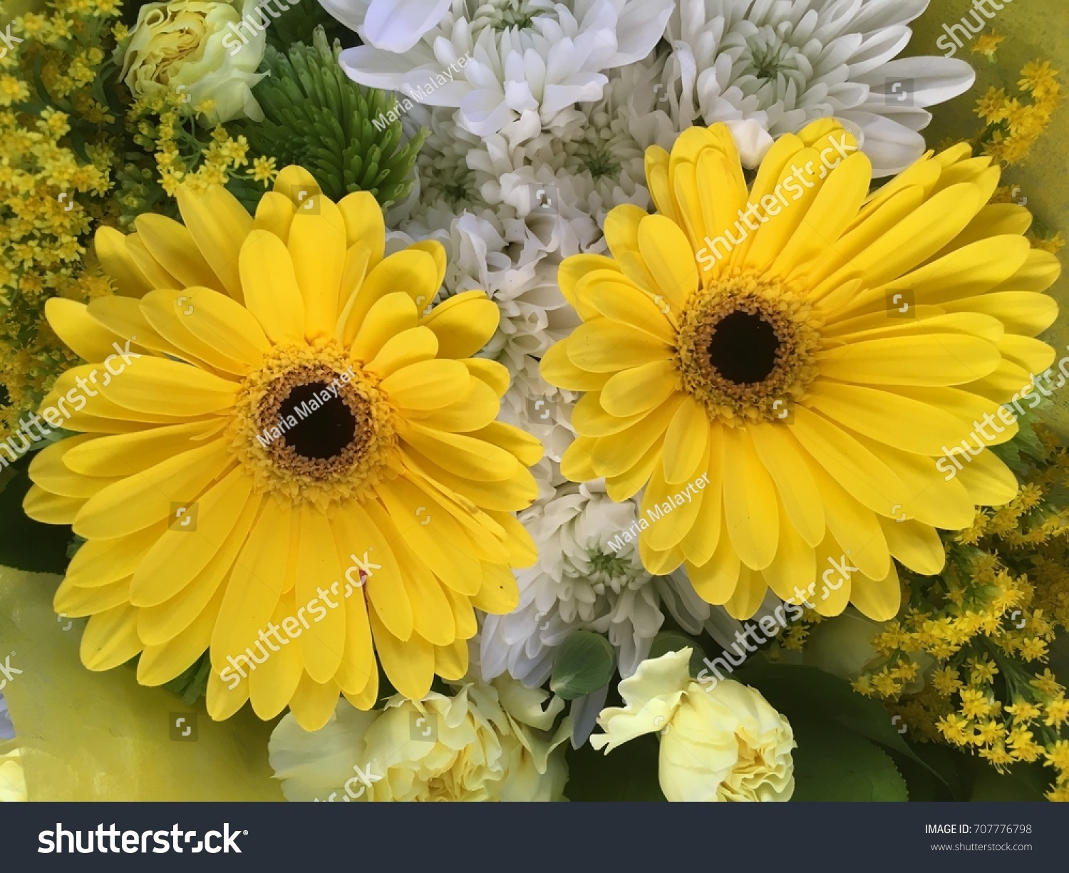 Two Yellow Daisy Like Flowers Several Stock Photo Edit Now
