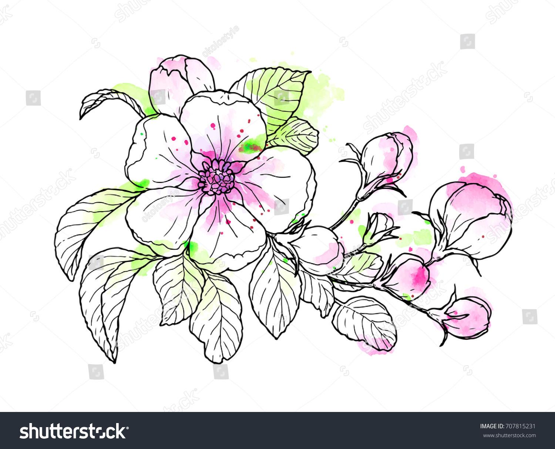Line Art Watercolor : Ink pencil watercolor flower sketch line stock vector