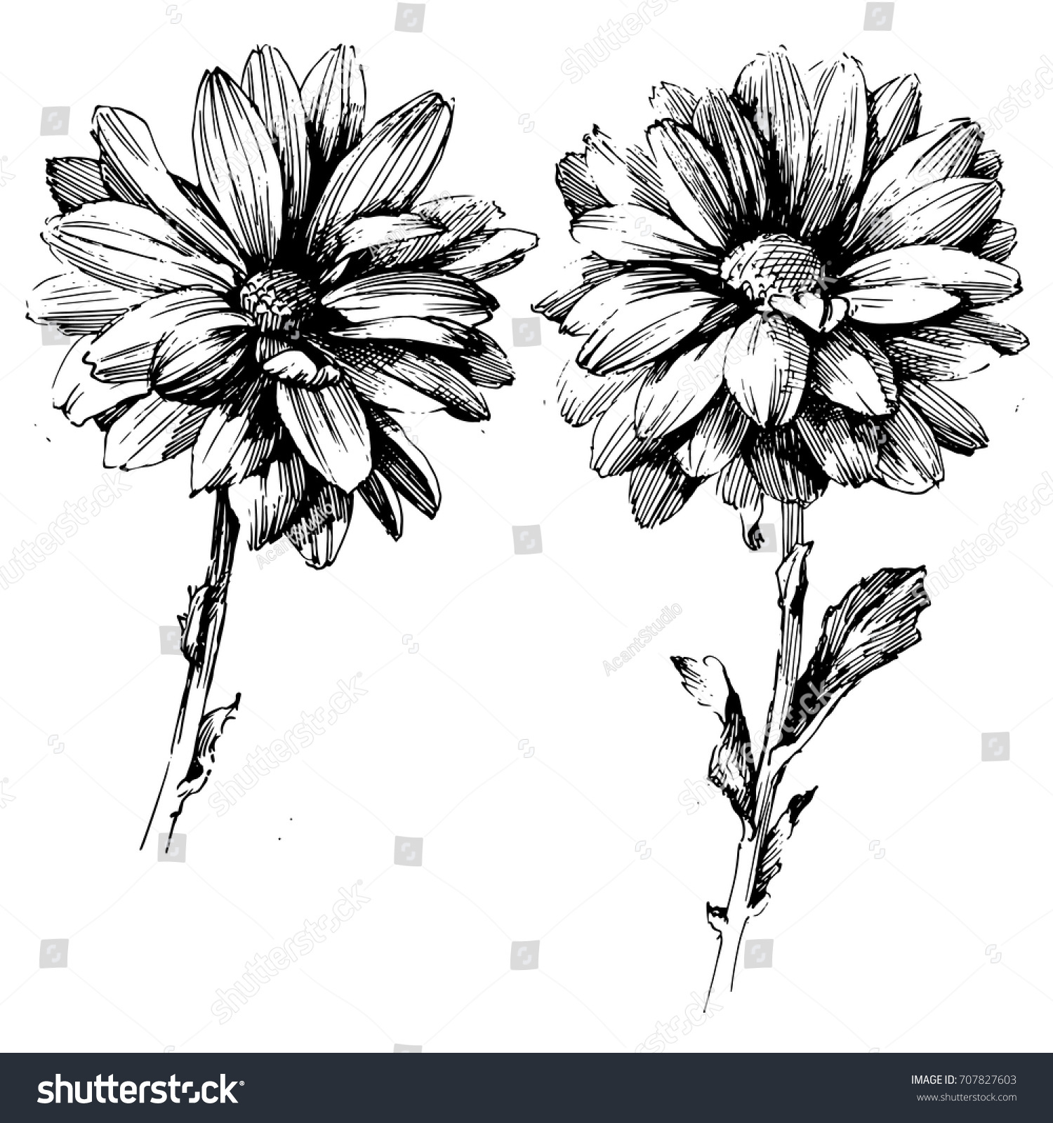 Line Drawing Flower Vector : Ink drawing flower vector illustration line stock