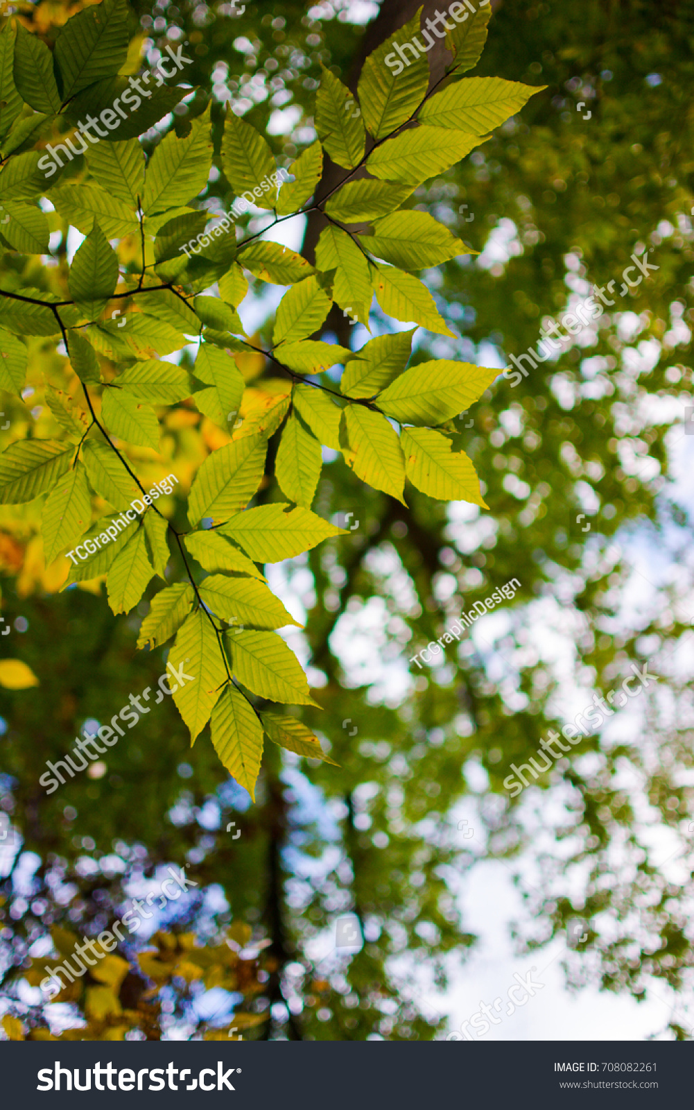Beautiful Fall Colors Leaves Trees North Stock Photo 708082261 ...