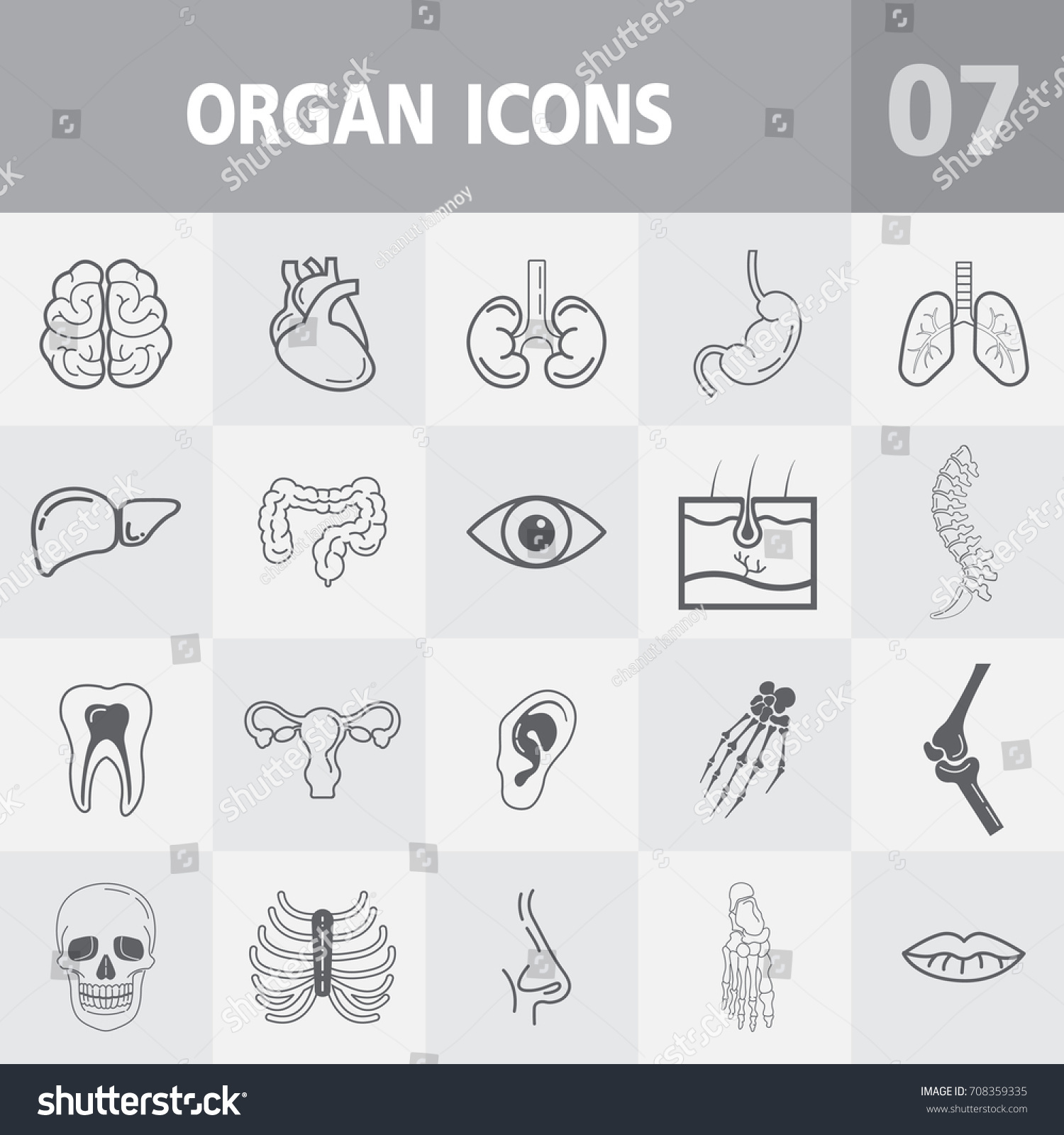 Human Anatomy Outline Icons Vector Icons Set Stock Vector 708359335