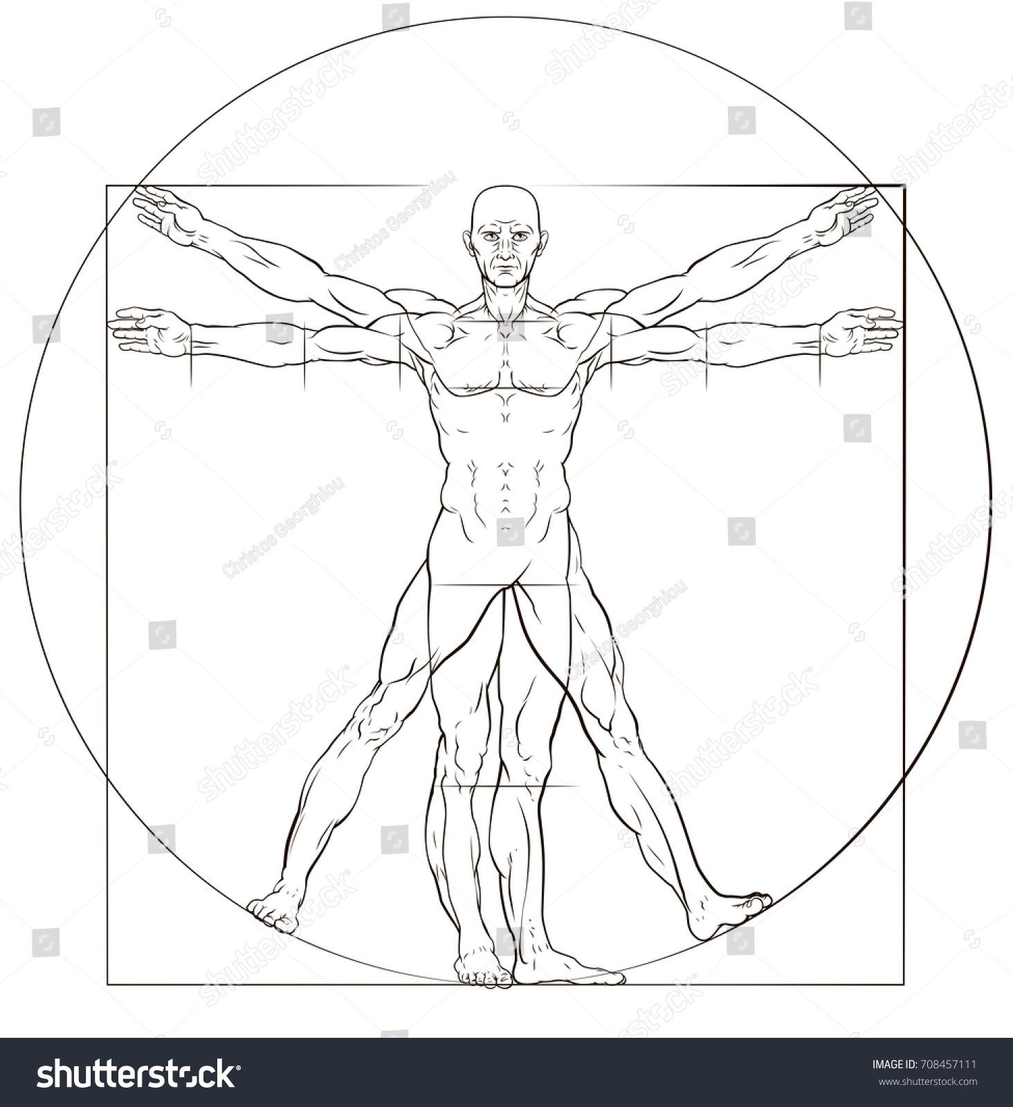 A human figure like Leonard Da Vinci s Vitruvian man anatomy ...