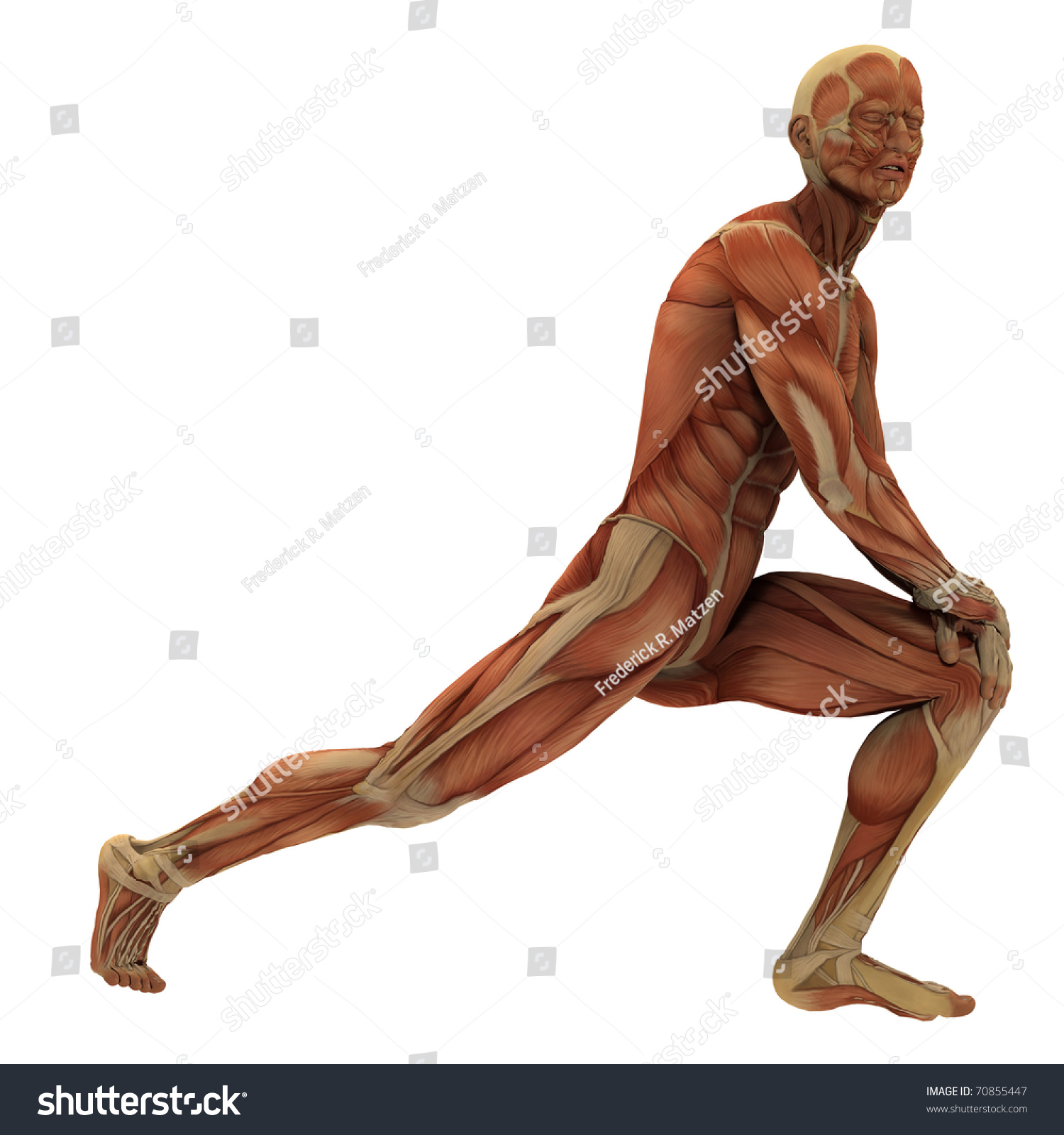 Male Figure In A Sports Pose Without Skin Exposing The Muscle