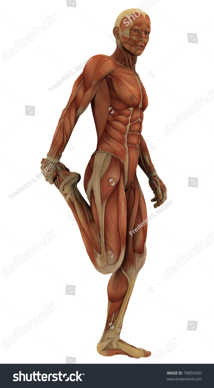 Royalty Free Stock Illustration Of Male Figure Sports Pose Without