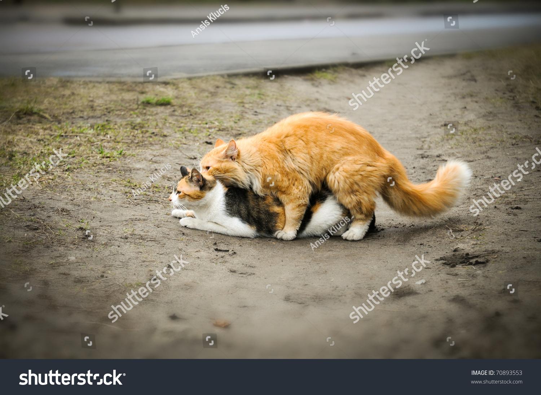 Cat sex id
