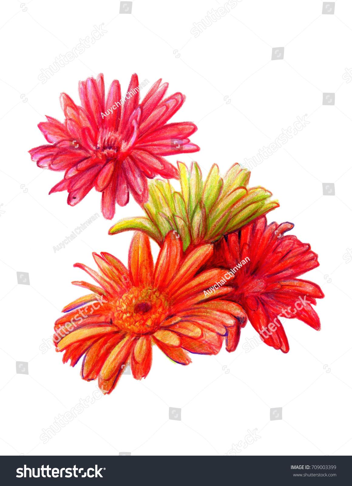 Still Life Colorful Gerbera Flowers Illustration Stock Illustration ...