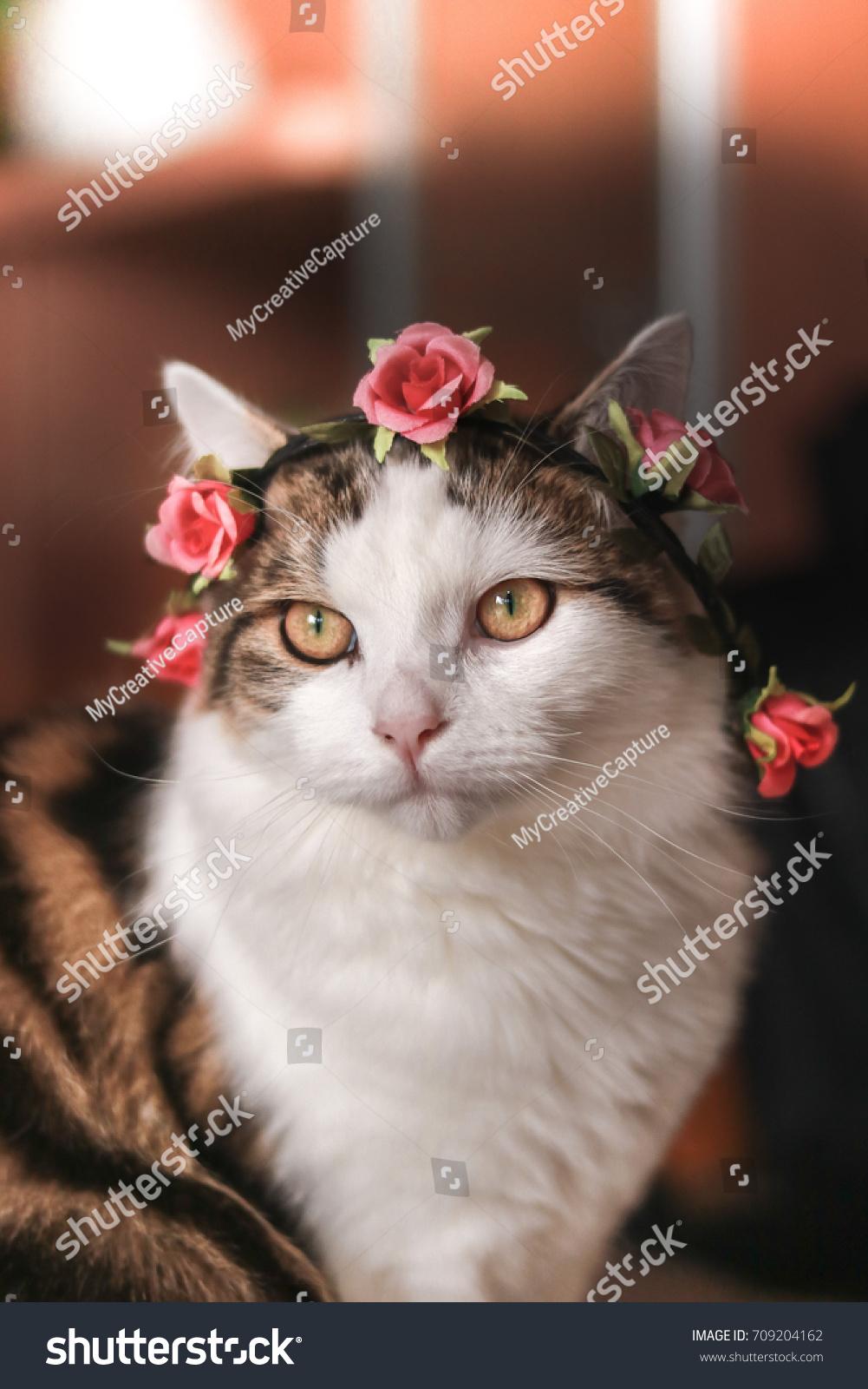 Beautiful Cat Wearing Flower Crown Stock Photo Edit Now 709204162
