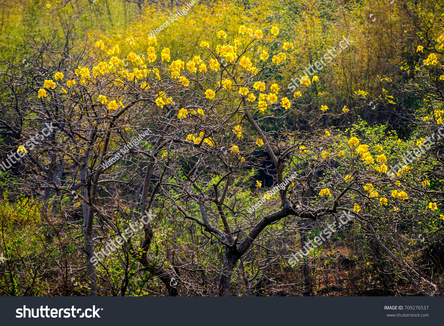 Dry yellow flowers winter season big stock photo edit now dry yellow flowers in winter season big tree beautiful in nature mightylinksfo