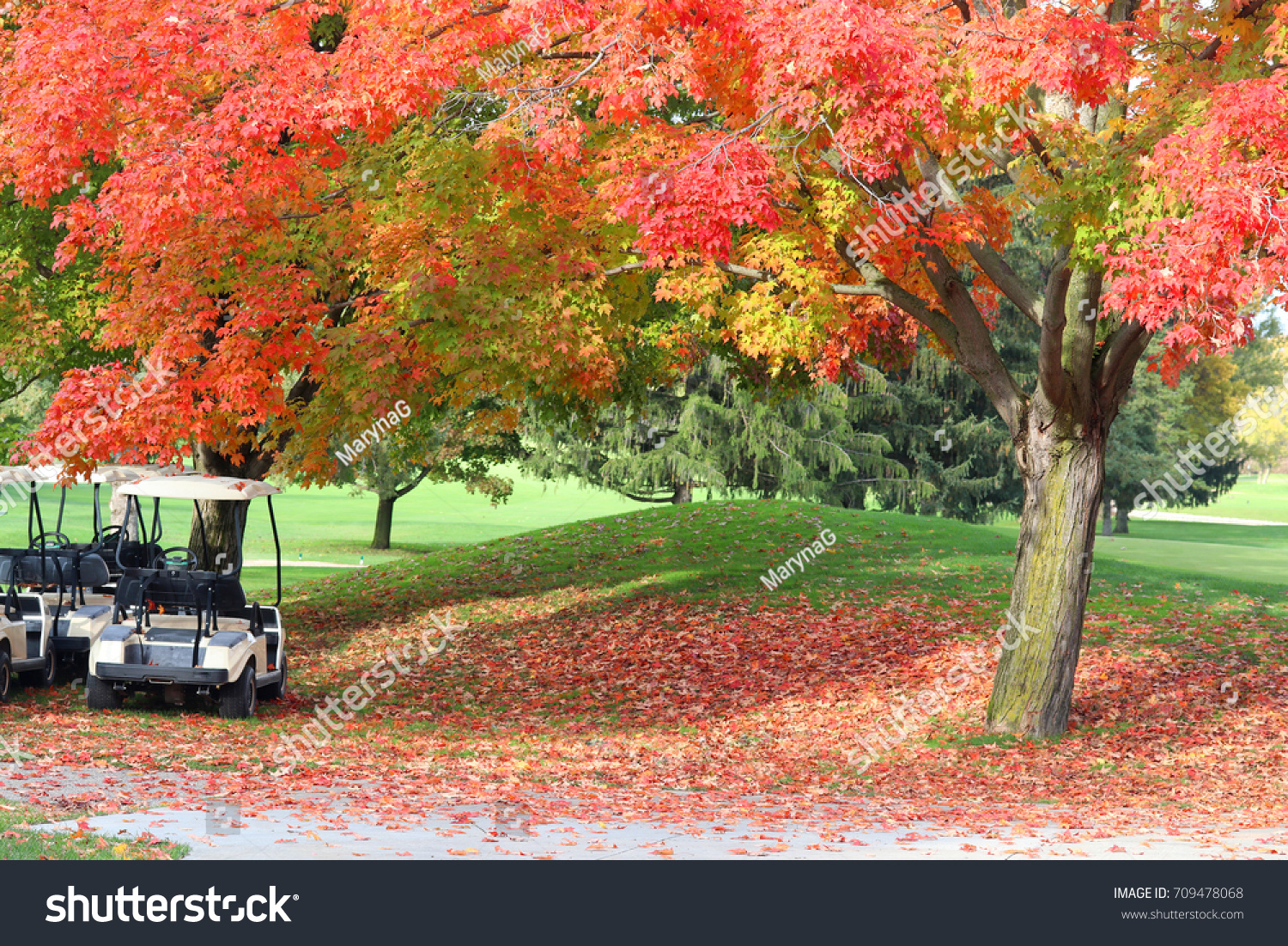 Nature Background Autumn Colors Beautiful Fall Stock Photo (Royalty ...