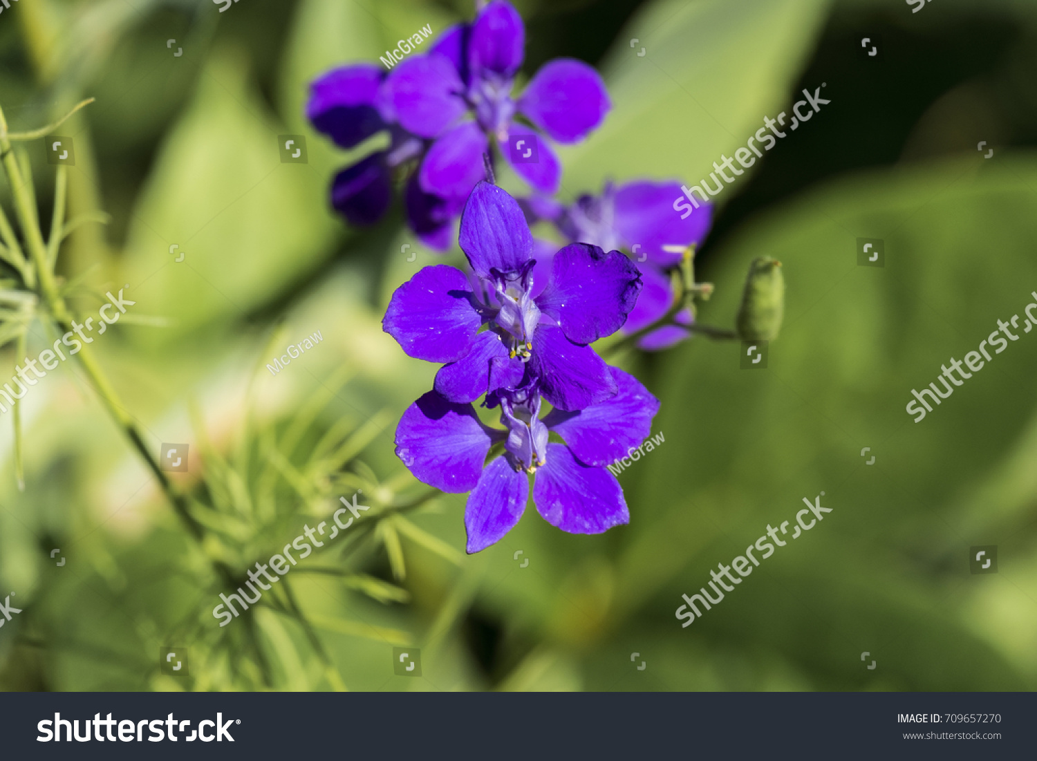Purple Flowers And Small White Flowers With Bright Green Leaves