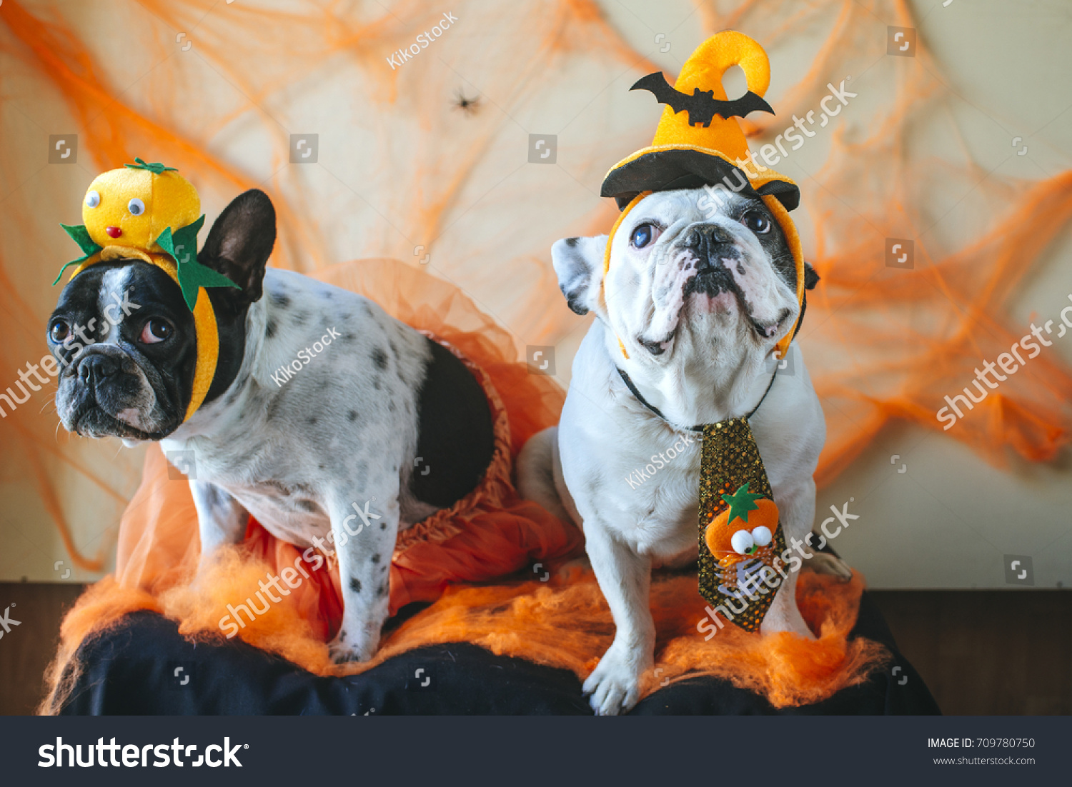 couple of dogs with halloween costume & Couple Dogs Halloween Costume Stock Photo (Royalty Free) 709780750 ...